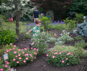 20150530_MLA_Sensory Garden-168